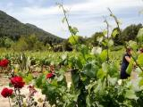 Organic Wine Production in Spain Jumps by 10%
