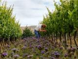 Spain Retains Top Spot in Organic Wine Production in Europe